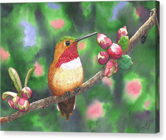 Hummy Canvas Print