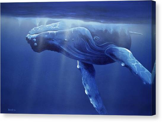 Humpback Portrait Canvas Print