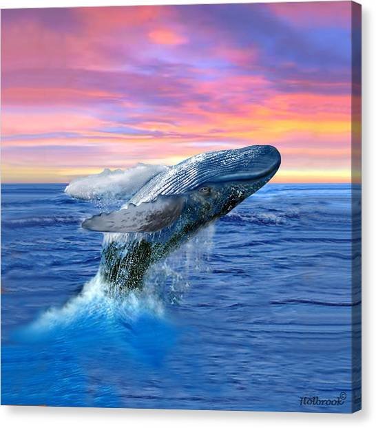 Humpback Whale Breaching At Sunset Canvas Print