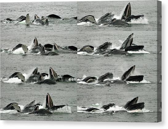 Humpback Whale Bubble-net Feeding Sequence X8 Canvas Print