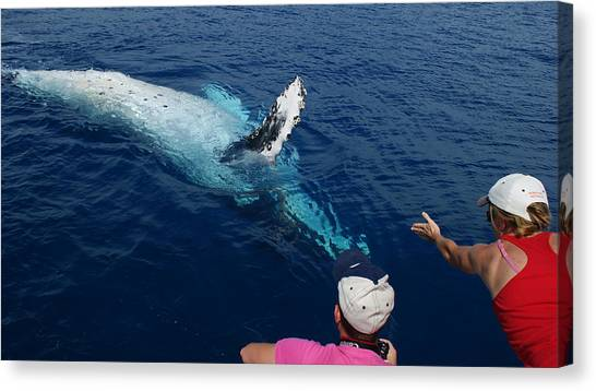 Humpback Whale Reaching Out Canvas Print