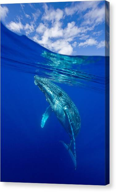 Humpback Whale With Clouds Canvas Print