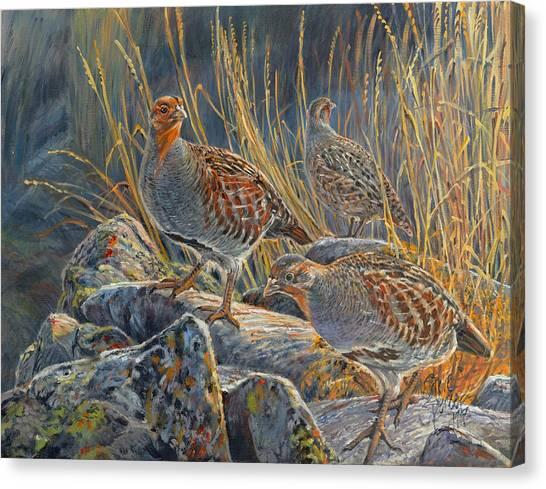 Hungarian Partridges Canvas Print
