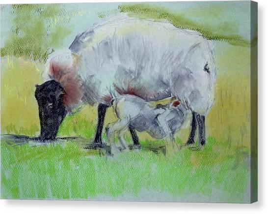 Hungry Lamb Canvas Print
