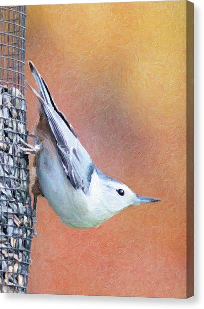 Hungry Nuthatch Canvas Print