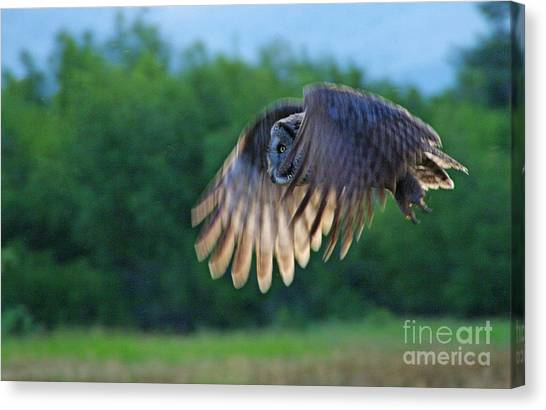 Hunter On Silent Wings Canvas Print