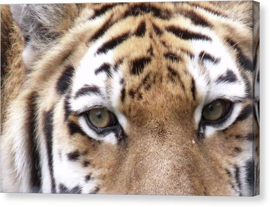 Hunters Eyes Canvas Print