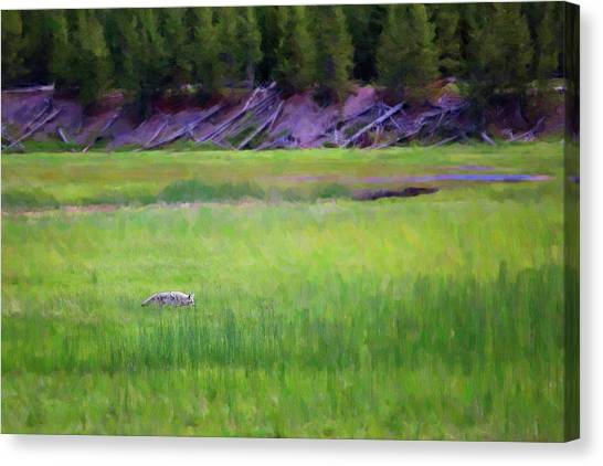 Canvas Print featuring the photograph Hunting by Sue Collura