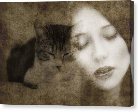 Kittens Canvas Print - Hurt So Good  by Paul Lovering