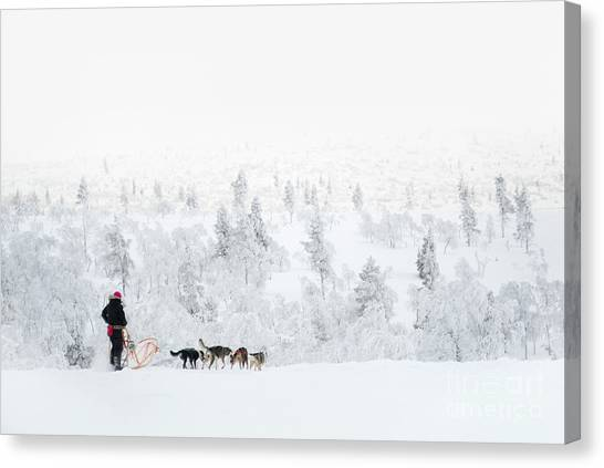 Huskies Canvas Print - Husky Safari by Delphimages Photo Creations