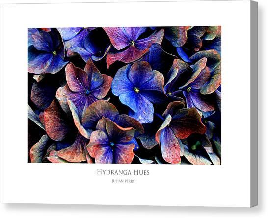 Hydranga Hues Canvas Print