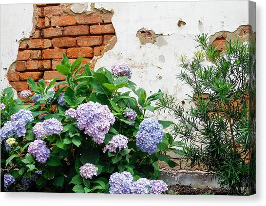Hydrangea And Bricks Canvas Print