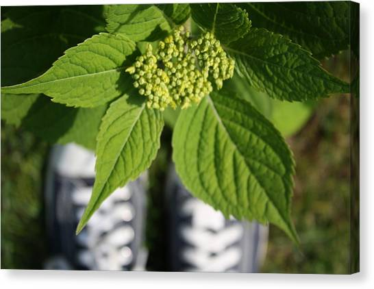 Hydrangea And My Sneakers Canvas Print by Annie Babineau