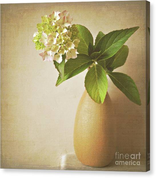 Hydrangea With Leaves Canvas Print