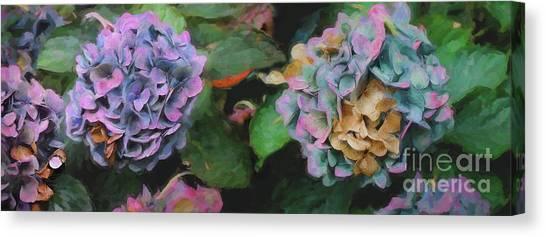 Blossom Canvas Print - Hydrangeas, 2018 by Helen White