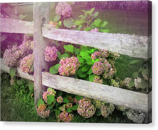 Hydrangeas Canvas Print by JAMART Photography