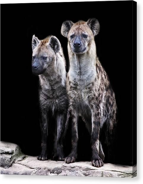 Hyena Canvas Print - Hyena Lookout by Martin Newman