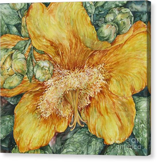 Hypericum Plant Canvas Print