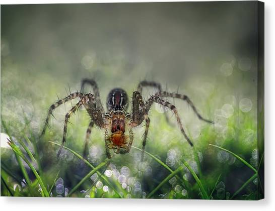 Spiders Canvas Print - I Am Back To You by Erwin Astro