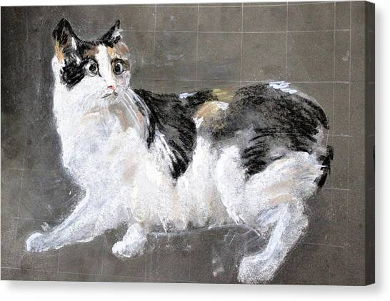 Manx Cats Canvas Print - I Am Manx by Khalid Saeed