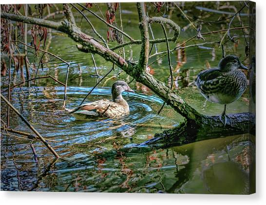 Canvas Print featuring the photograph I Am Pritty #h9 by Leif Sohlman