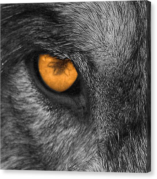 I Am Wolf Canvas Print