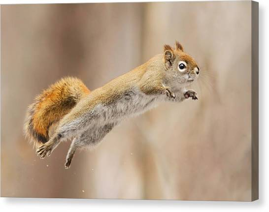 Humour Canvas Print - I Can Fly! by Mircea Costina