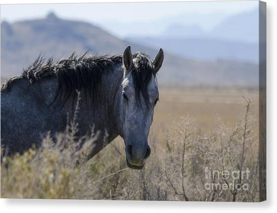 I Can See You Canvas Print by Nicole Markmann Nelson