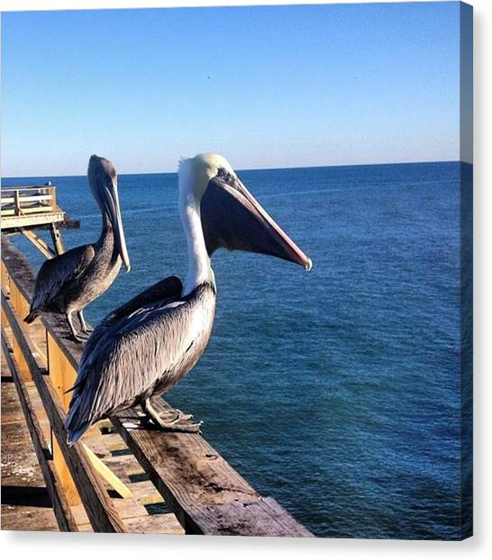 Large Birds Canvas Print - Two Pelicans by Kelsi Giardiello
