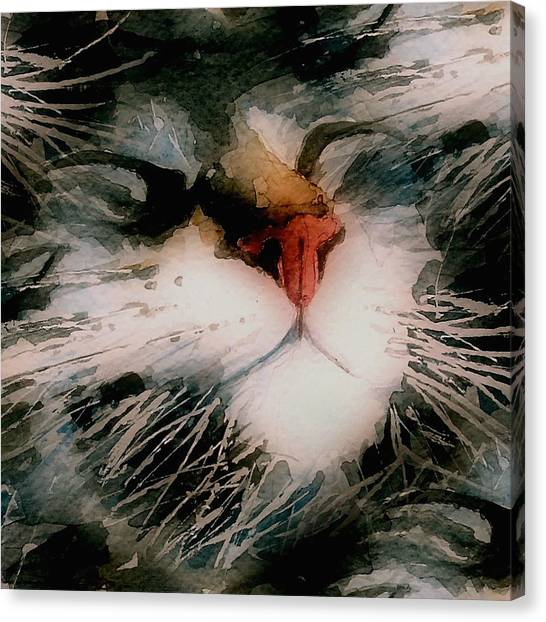 Kitten Canvas Print - I Can't Make You Love Me by Paul Lovering