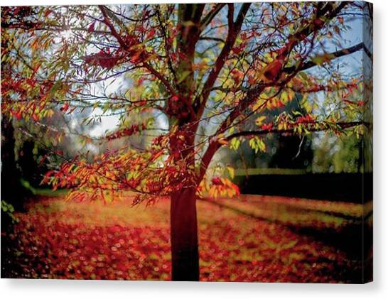 Orchard Canvas Print - I Can't Remember Where This Was Taken by Pete Russell