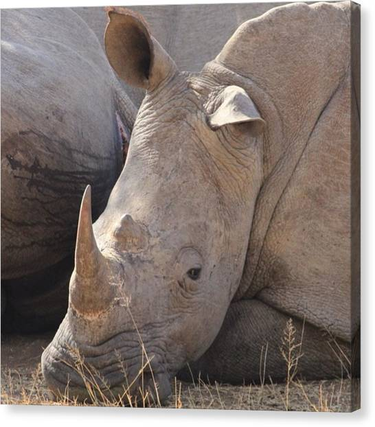 Rhinos Canvas Print - I Couldn't Think Why People Would Want by Malcolm Duke