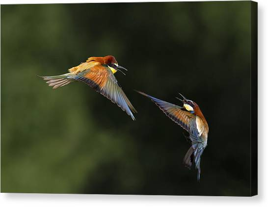 Flight Canvas Print - I Do Not Want You by Marco Redaelli