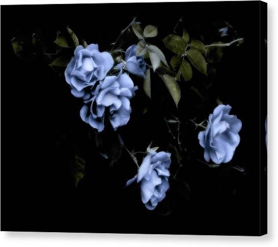 I Dream Of Roses Canvas Print