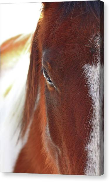Countryside Canvas Print - I Got My Eyes On You by Evelina Kremsdorf