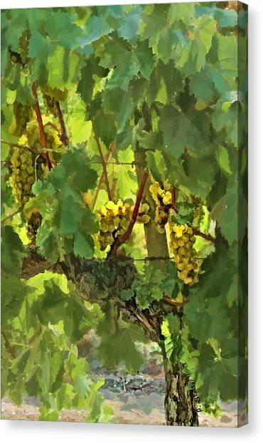 I Heard It On The Grapevine Canvas Print by Patricia Stalter