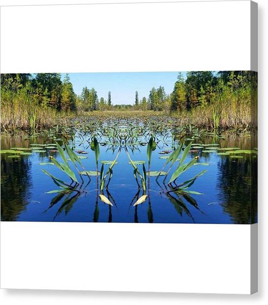 Okefenokee Canvas Print - I Hope Everyone Has A Great Night! ♡ by Karen Breeze