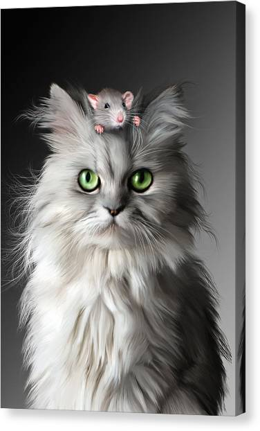 Persians Canvas Print - I Know Its Here     Somewhere by Julie L Hoddinott