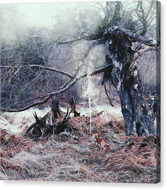 Foggy Forests Canvas Print - I Really Wanted Him To Have A Cigar by Kris K
