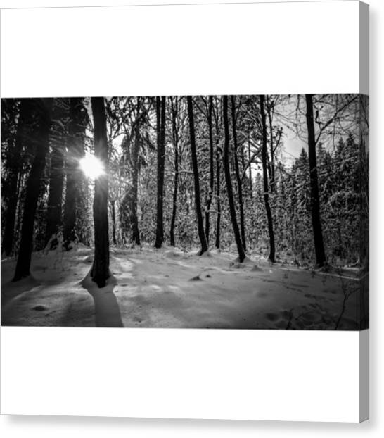 Forests Canvas Print - I Saw It.