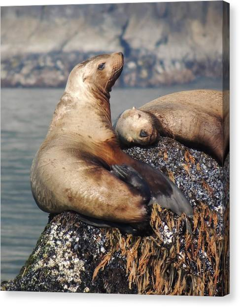 Canvas Print - I Sea Lion Napping by Red Cross