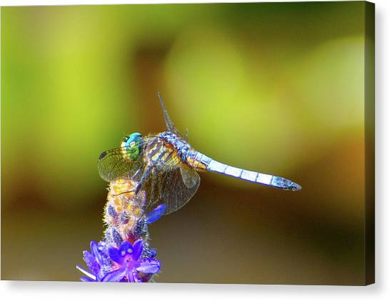 I See You, Dragonfly Canvas Print