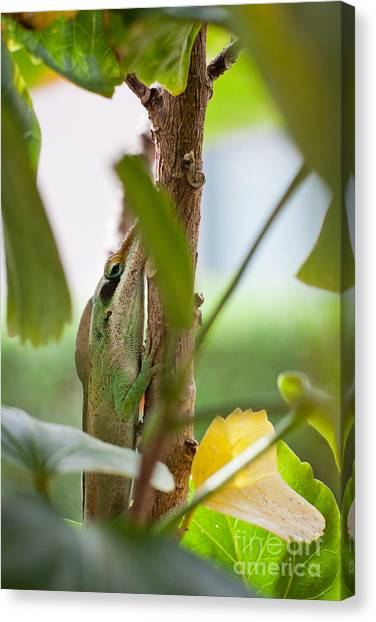 Canvas Print featuring the photograph I See You by Sandy Adams