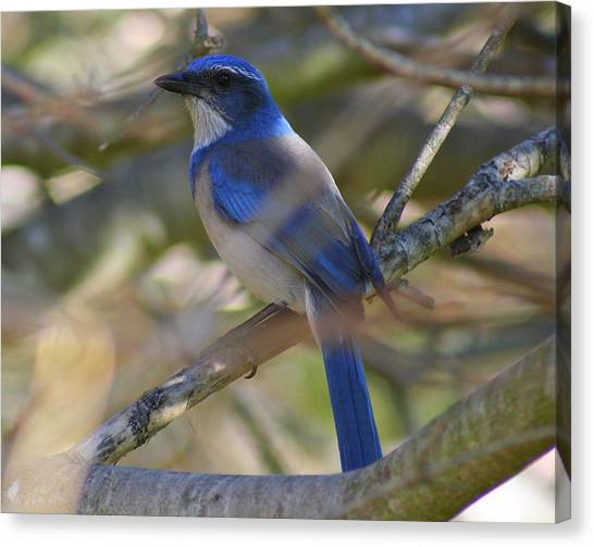 I Think I Found The Blue Bird Of Happiness Canvas Print by Kerry Reed