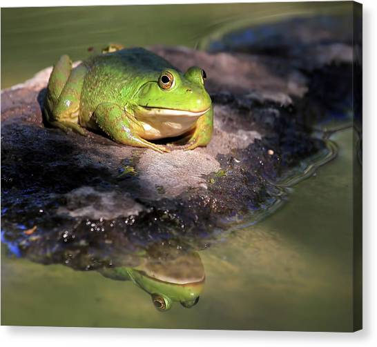 Bullfrogs Canvas Print - I Toad You So by Donna Kennedy