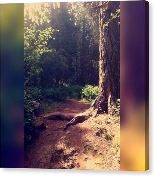 Sunny Canvas Print - I Try To Walk The Path Of The Righteous by Sarah Robinson