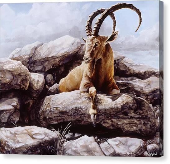 Ibex Canvas Print
