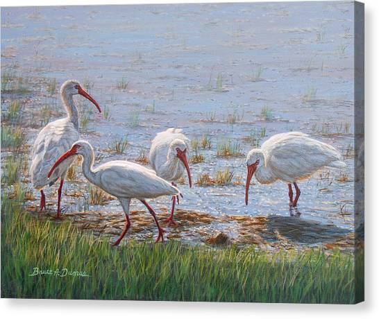 Ibis Excursion Canvas Print by Bruce Dumas