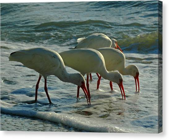 Ibises At Bowman Canvas Print by Juergen Roth