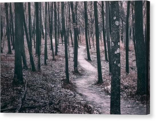Forest Paths Canvas Print - Ice Age Trail Near Lapham Peak by Scott Norris